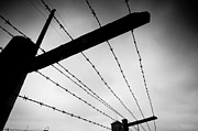 World Violence Framed Prints - Barbed wire fence Framed Print by Michal Bednarek