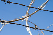 Isolated On Blue Background Framed Prints - Barbed Wire  Framed Print by Jim Pruitt