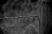 Kamgeek Photography - Barbed Wire