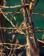 Barbed Wire Fences Photos - Barbed Wire by Mark Alder