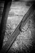 Barbed Wire Fences Photos - Barbed Wyoming by Jamie Shaw