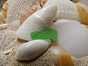 Kimberly Perry - Barbuda Seashells and...