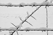 Structural Art - Barbwire Fence in Snow 1 by Heiko Koehrer-Wagner