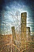 William Havle - Barbwire Fences