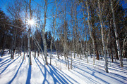 Winter Sun Framed Prints - Bare Aspens Framed Print by Darren  White