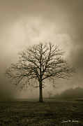 Brown Toned Art Digital Art Posters - Bare Tree And Clouds  Poster by Dave Gordon