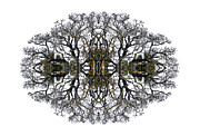Lacy Abstract Posters - Bare Tree Poster by Debra and Dave Vanderlaan