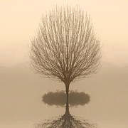 Nature Center Pond Digital Art Posters - Bare Tree in Fog at Dawn Poster by Cheryl Casey