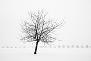 Tree Line Prints - Bare tree in winter - wonderful black and white snow scenery Print by Matthias Hauser