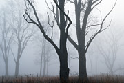 Bare Trees Prints - Bare Trees in Fog Print by Dean Pennala