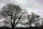 Appleton Prints - Bare Trees Winter Sky Print by David Stone