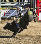 Ron Roberts Photography Posters - Bareback Bull riding Poster by Ron Roberts