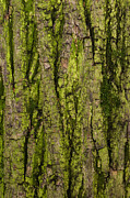 Cellular Photos - Bark - Featured 3 by Alexander Senin