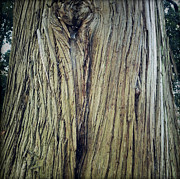 Tree Outside Framed Prints - Bark Framed Print by Les Cunliffe