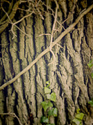 Leafs Photos - Bark Pinhole by Wim Lanclus