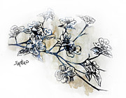 Signed Drawings Prints - Barking Dogwood Print by Amanda  Sanford