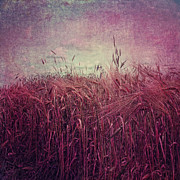 Abstract In Nature Posters - Barley Field 2 Poster by Kristin Kreet