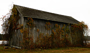 Red Fallen Leave Prints - Barn 2 Print by Andrea Anderegg
