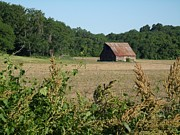 Rusted Tin Roof Photos - Barn and Brush by David Addams