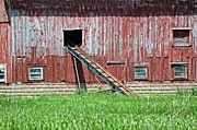 Cheryl Cencich - Barn And Ladder