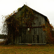 Red Fallen Leave Photo Posters - Barn Poster by Andrea Anderegg