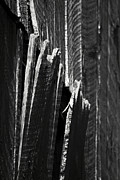 Jagged Edge Posters - Barn Boards Black and White Poster by Rebecca Sherman