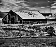 Disrepair Prints - Barn by the River bw Print by Cheryl Young