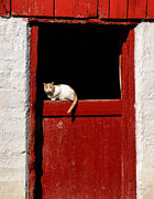 Andrea Kollo Metal Prints - Barn Cat Metal Print by Andrea Kollo
