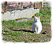 Susan Leggett - Barn Cat