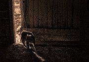 Farm Prints Posters - Barn Cat Poster by Theresa Tahara