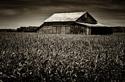 Old Barn Posters - Barn in Cornfield Poster by Todd Bielby