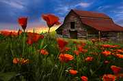 Spring Scenes Posters - Barn in Poppies Poster by Debra and Dave Vanderlaan
