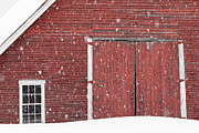 Snow Drifts Prints - Barn In Snowfall Print by Alan L Graham