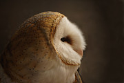 Barn Owls Framed Prints - Barn Owl 3 Framed Print by Ernie Echols