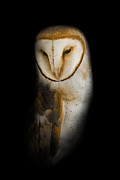 Hissing Posters - Barn Owl Poster by Bill  Wakeley
