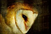 Barn Digital Art - Barn Owl by Lois Bryan