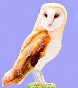 Marian Cates Metal Prints - Barn Owl Metal Print by Marian Cates