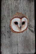 Donna Genovese - Barn Owl Sculpted on...