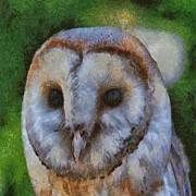 Tracey Harrington-Simpson - Barn Owl