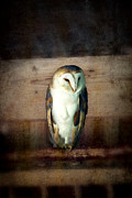 Weathered Prints - Barn owl vintage Print by Jane Rix
