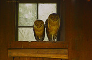 Barn Owls Prints - Barn Owls Against Window Print by George Hanson