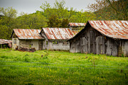 Tennessee Barn Prints - Barn Row Print by Paul Bartoszek