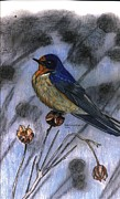 North American Wildlife Drawings Posters - Barn Swallow Poster by Don  Gallacher