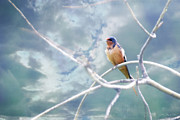 Julie Magers Soulen - Barn Swallow on Blue Sky
