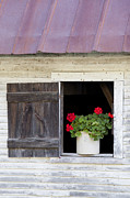 Alan L Graham - Barn Window Geraniums