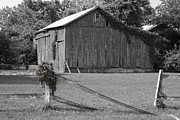 Split Rail Fence Photos - Barn with Ivy by William Crenshaw