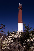 American Lighthouses Photo Posters - Barnegat Tower Poster by Skip Willits