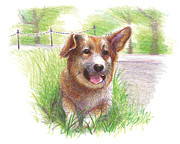Corgi Drawings - Barney - Color Study 01 by Ryan Irish