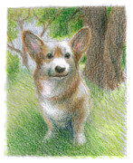 Corgi Drawings - Barney Color Study 02 by Ryan Irish