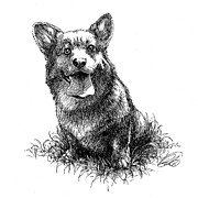 Corgi Drawings - Barney - Pen Study 01 by Ryan Irish